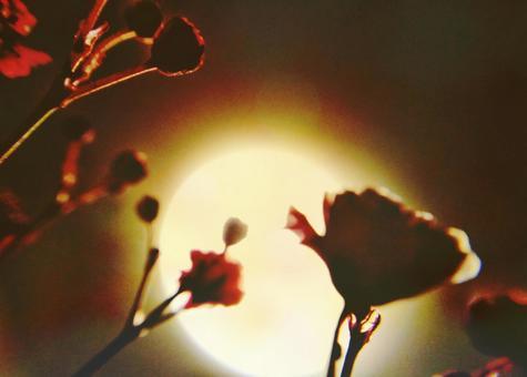 天花燈霧草似月