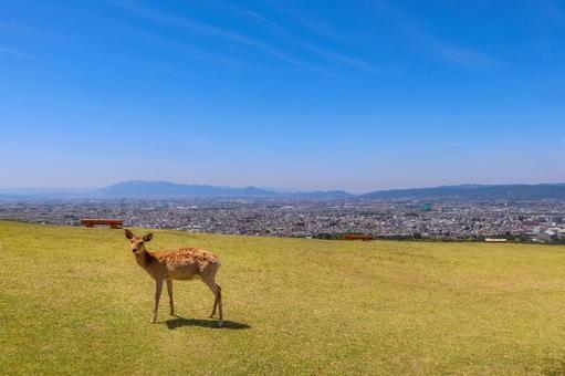 와카 쿠사 홑겹 눈 잔디에 자리 잡은 한 마리의 사슴