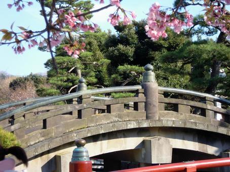 가마쿠라 쓰루 오카 하치만 구 홍예 다리와 벚꽃