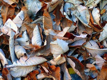 Background · fallen leaves
