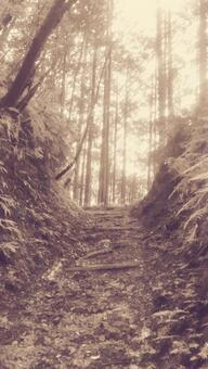 Kumano Kodo Forest and Mountain Road ①-Sepia (mysterious air and cloudy weather)