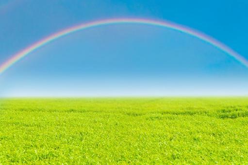 Meadow, blue sky and rainbow