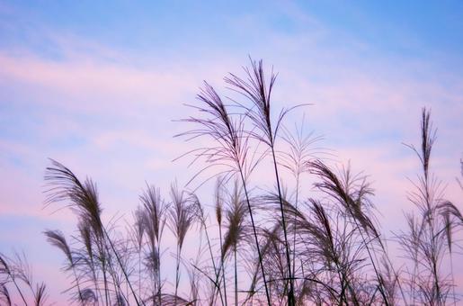 Evening sky and Susuki