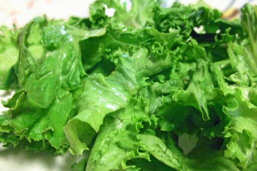 Lettuce # 1