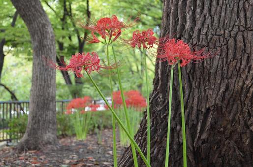 피안 꽃 6