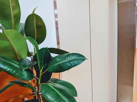 엘리베이터 옆에있는 관엽 식물