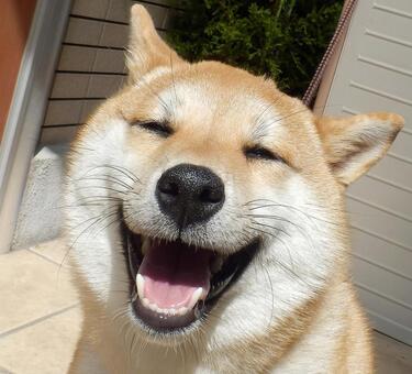 시바의 미소