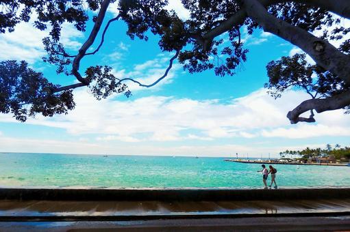 하와이 섬 카이루아코나의 거리 풍경 2