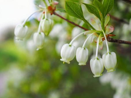 도우단쯔쯔지 꽃
