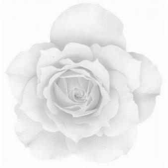 [Smooth clipping] White roses 01
