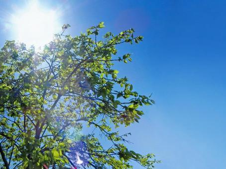 Real summer sun