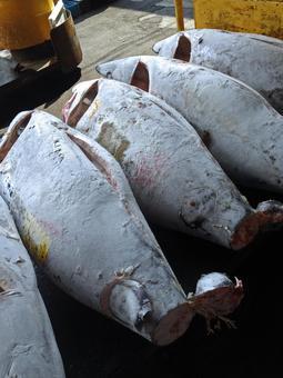 Tsukiji market · book tuna