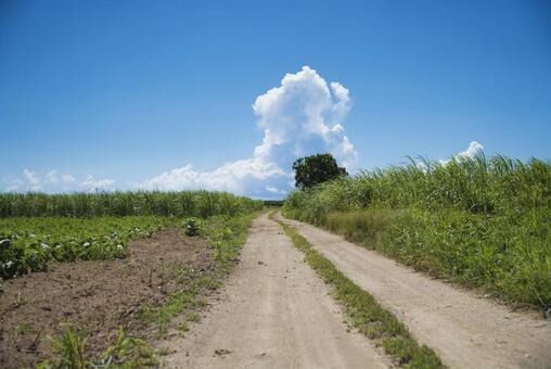 Ishigakijima Okinawa sugarcane field (sugar road)