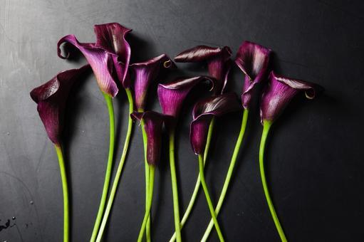 Color (purple) 7