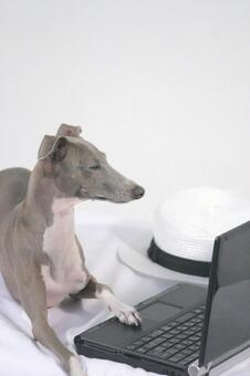 Personal computer and dog