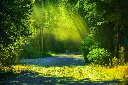 녹색 풍경 26