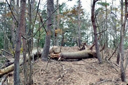 쓰러진 나무 트레킹