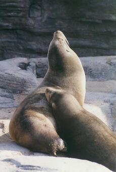Seal [seal] -011