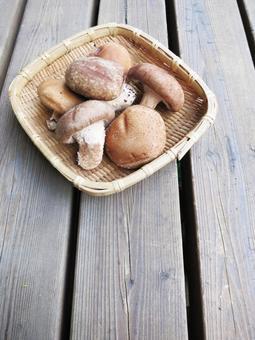 표고 버섯