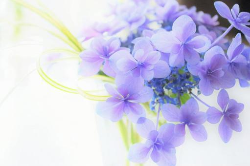 Cool purple hydrangea hydrangea