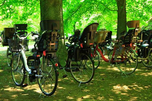 그늘 아래 자전거들
