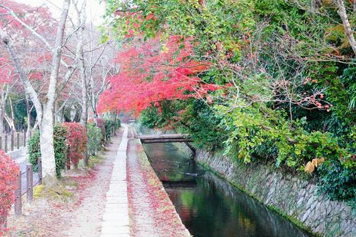 Autumn Kyoto Philosophy Road Landscape dyed with autumn leaves