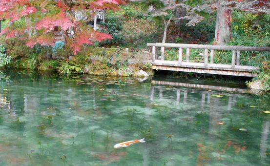 이름없는 연못의 단풍