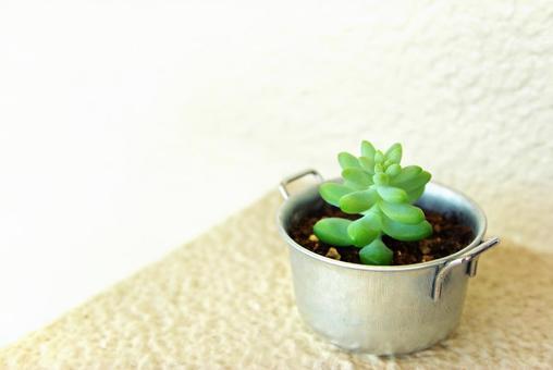 Succulent plant ball spelling 1