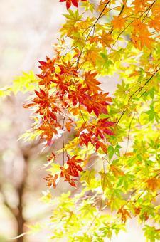 Autumn leaves 12