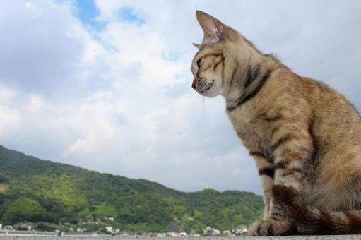 푸른 하늘과 고양이