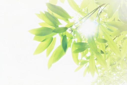 Summer background material with beautiful gentle green and beautiful sunlight through the glittering sun