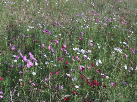 Flower field P270037