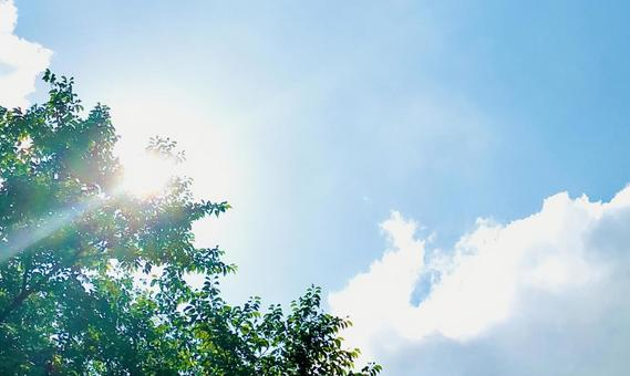 Glittering Komorebi and the sky background