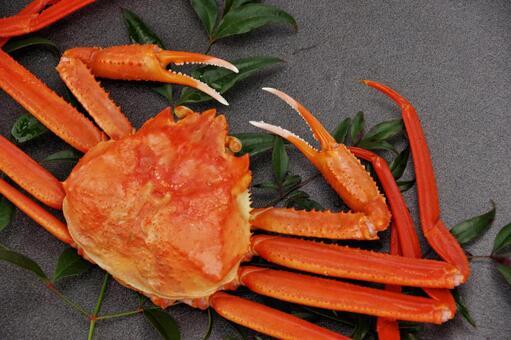 Matsuba crab crab