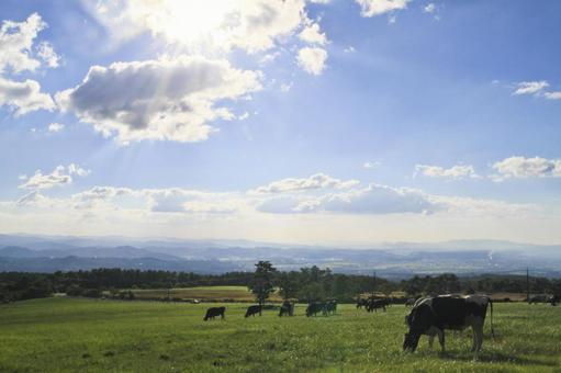 Ranch and cows