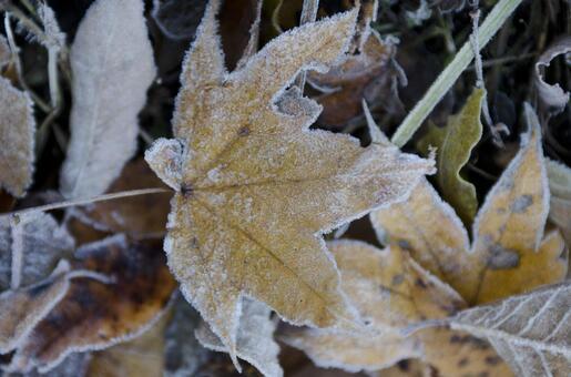 Frozen leaves 5