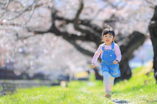 Girl walking along a row of cherry blossom trees