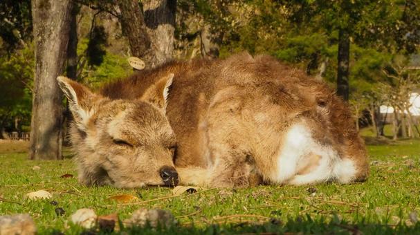자고있는 새끼 사슴 씨