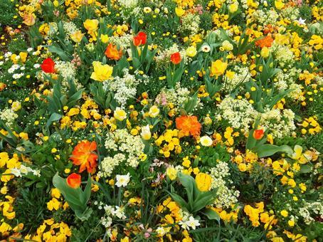 꽃 피는 노란색과 주황색과 흰색 꽃의 융단