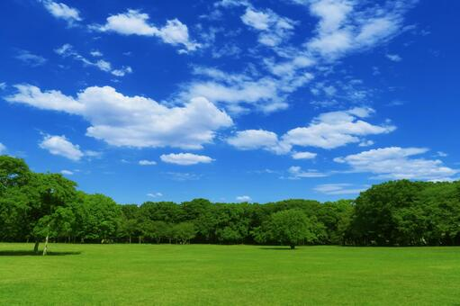 Summer lawn, blue sky, clouds and green trees