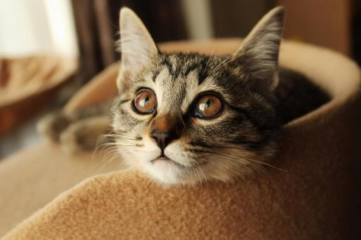 A cat looking up