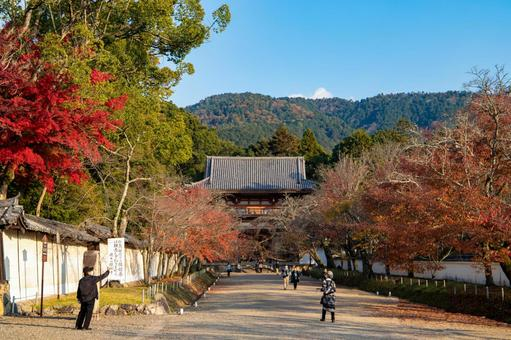 Autumn leaves on the approach to Daigoji Temple in Kyoto