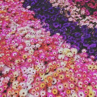 꽃의 융단