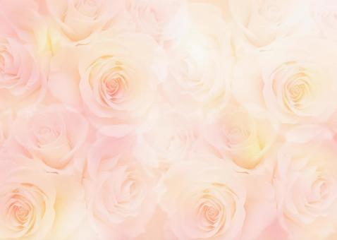 Light rose background