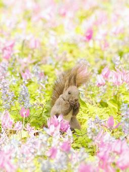 Early Spring flower garden