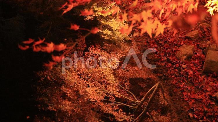 曽木公園 紅葉越しに見える水辺の逆さ紅葉の写真