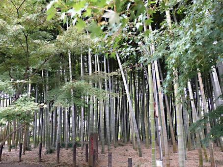 Bamboo grove view