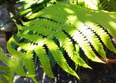 코고미 잎 표면