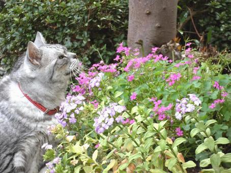 봄의 햇볕과 고양이