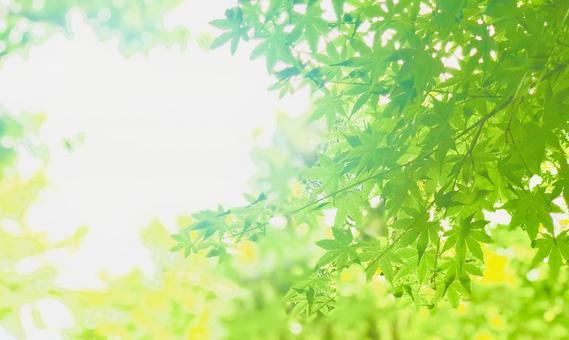 Glittering blue maple leaves background